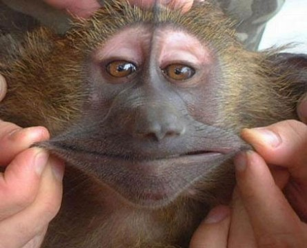 funny_monkey_smiling-445x360